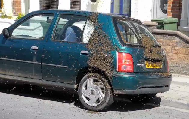 النحل يغزو سيارة نيسان ميكرا