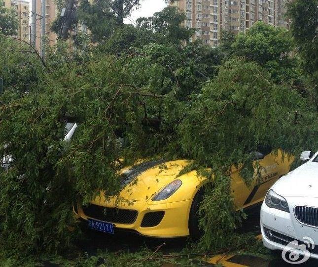 شجرة تسقط فوق فيراري 599 GTO النادرة