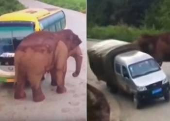 هجوم مرعب لفيل على حافلة وشاحنة صغيرة - فيديو