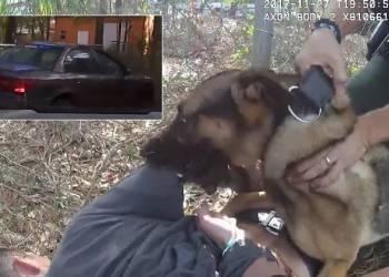 مطاردة سريعة تنتهي بهجوم كلب شرطة على الهارب - فيديو