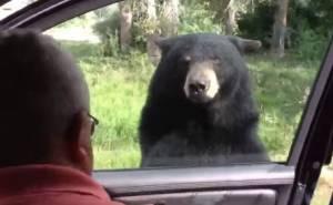 دب يفتح باب سيارة في منتزه ويثير رعب ركابها