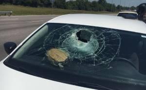 سلحفاة تحطم زجاج سيارة فولكس واجن على الطريق السريع