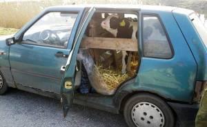 حجل في سيارة فيات بونتو