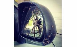 عناكب تغزو سيارة