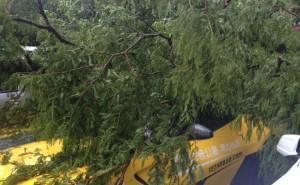 شجرة تسقط فوق فيراري 599 GTO