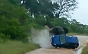الفيل يقلب السيارة