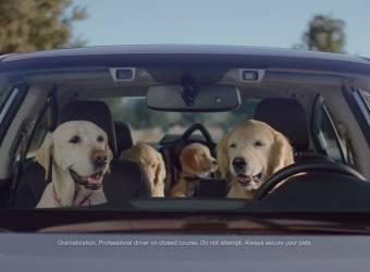 كلاب تقود سيارات سوبارو بشكل قانوني