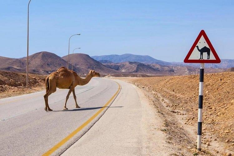 قوانين المرور الغريبة في أمريكا