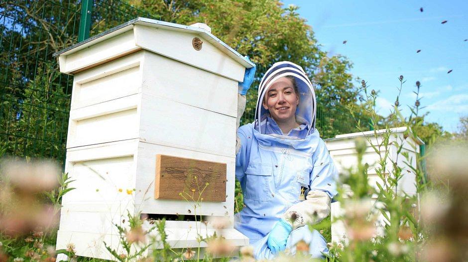 مزرعة عسل